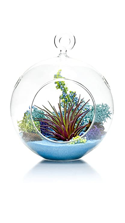 Amazon Com Air Plant Terrarium Kit Aquatic Paradise Natural