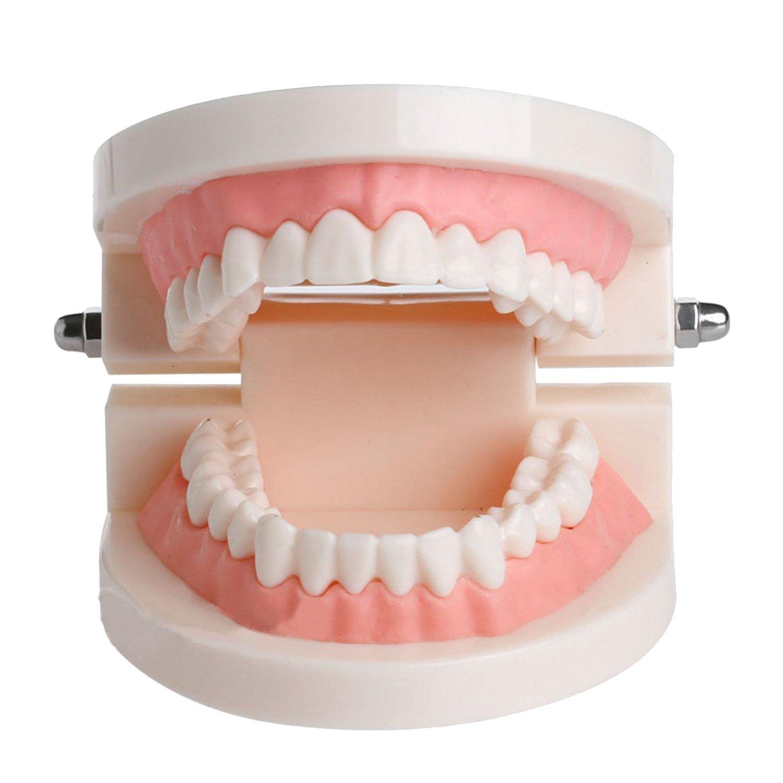 Dental Adult Standard Typodont Demonstration Teeth Model Standard Pathological Tooth Teaching Tools Child Kid Teeth Model Dental Dentist Teaching Studying Model for Dentist Student Children