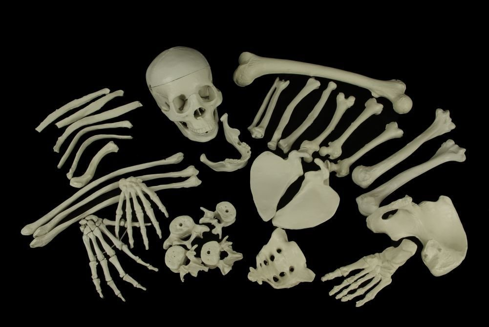 Anatomical Chart Co. Bags of Bones Item #: BONES1: Human Anatomical ...