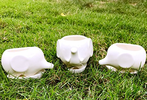 Succulent Planter Pots,3 Mini Elephant Flower Planter Pots with Drain Holes, White Ceramic