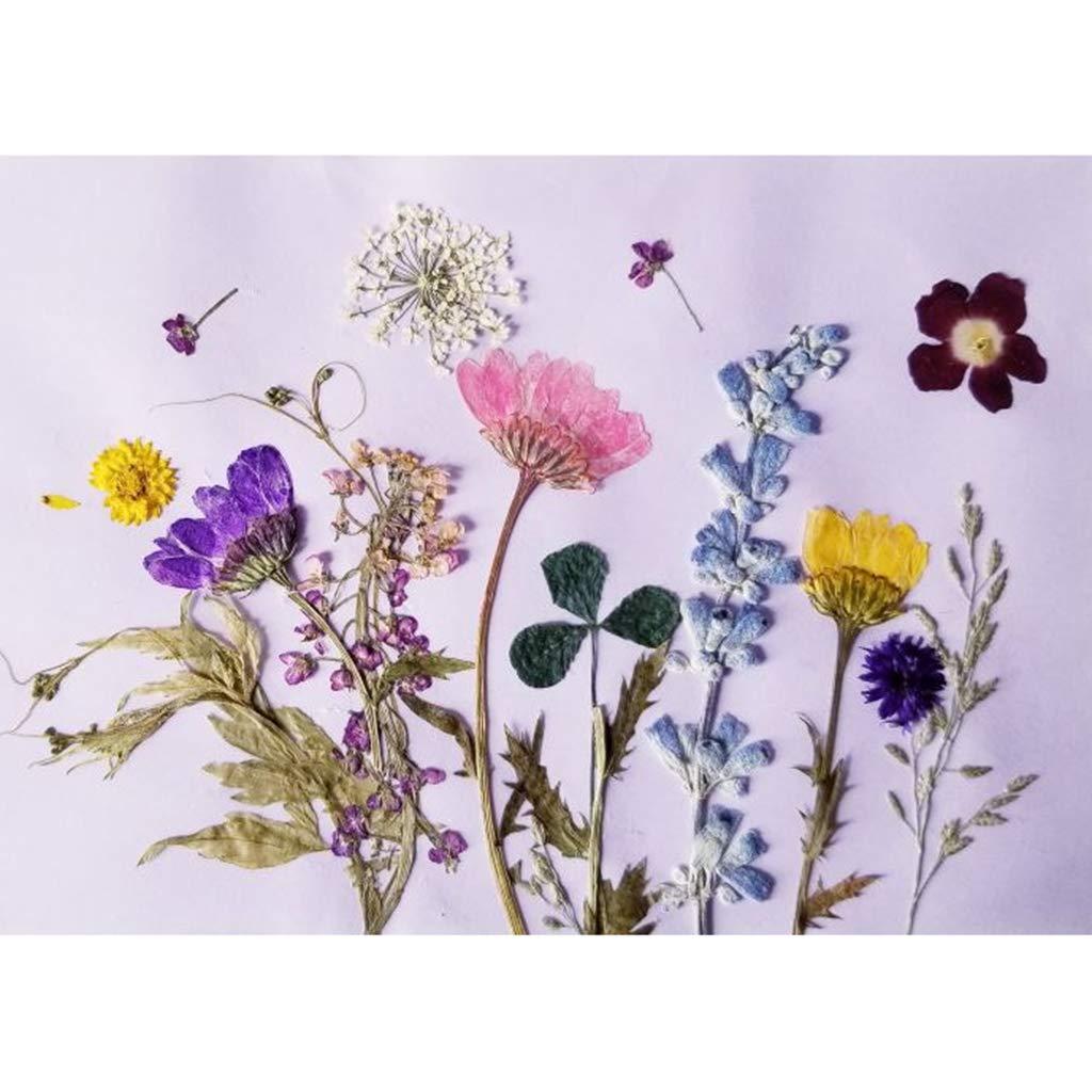 B Baosity 12x Echte Natürliche Getrocknete Blumen