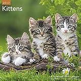 Kittens Wall Calendar (2017)