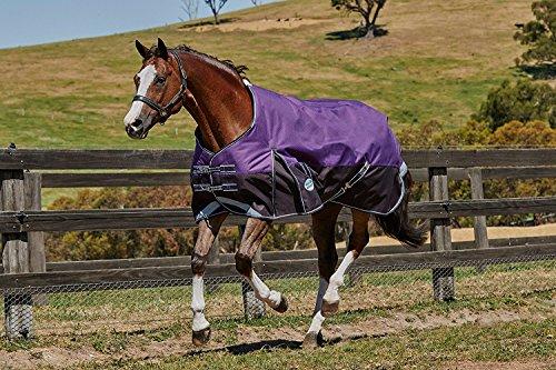 - Weatherbeeta Comfitec Plus Dynamic Standard Neck Lite Purple/Black 75