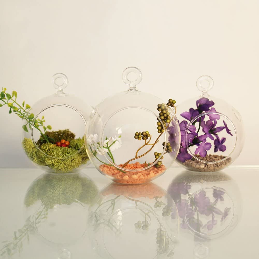 Tea Light Candle Holders Air Plants CYS EXCEL Plant Terrarium Glass Orbs 5.5 Tall x 5 Wide, Pack 2