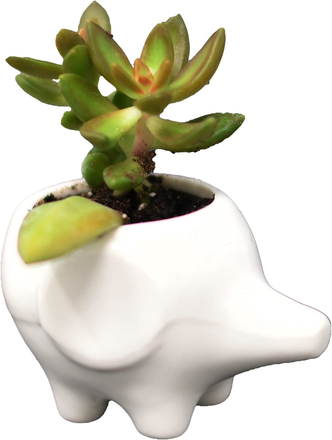Flower Pot for House Plants-Plant Pots Set for Indoor Outdoor Use Baby Elephant by Arad