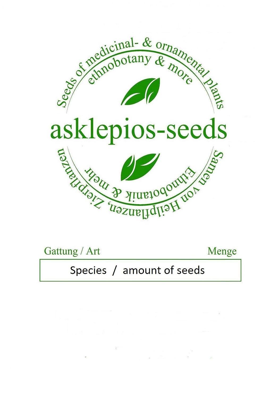 Asklepios-seeds® - 1000 seeds of Paulownia elongata, Royal Empress tree, viable quality seeds