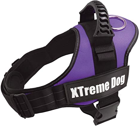Arquivet Arnés Xtreme Dog, M (61-81 cm): Amazon.es: Productos para ...