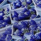 Loveble 500Pcs Blue Strawberry Rare Fruit Seeds Bonsai Edible Climbing Plant