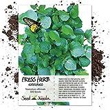 Seed Needs, True Watercress (Nasturtium officinale) 500 Seeds Non-GMO