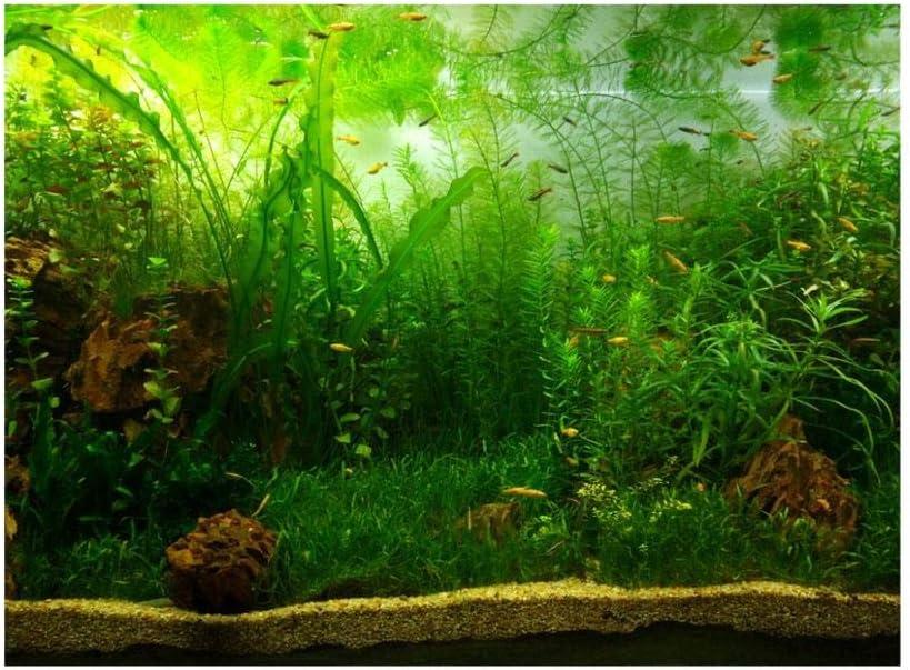 Amazon Com Aquarium Fish Tank Background Poster Pvc Adhesive Decor Paper Green Water Grass Aquatic Style Like Real 12261cm Home Kitchen