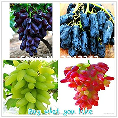 50 Pcs / Bag Rare Finger Grape Seeds Delicious Fruit Seed Bonsai Potted Plants Climbing Tree For Home Garden Diy Plant Sementes Multi-Colored : Garden & Outdoor