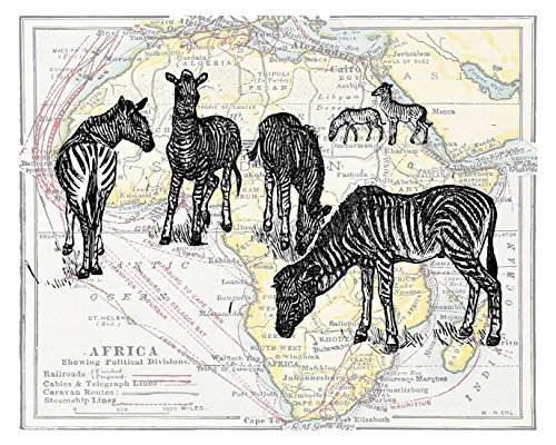 11x14 Inch Fine Art Print of Wild Zebras on the African Plains - Overlaid on an Reproduction Antique Map of Africa. Size: 11x14 Inches (WildZebMap1114)