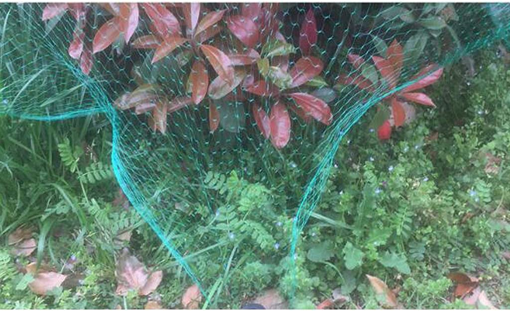 HomeDecTime Anti Bird Netting Green Net Protect Tree Cultivos Plant Fruit Garden Mesh 5x10m Mantenga A Las Aves Alejadas Red Protectora De Gran Tama/ño