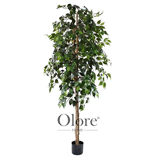 6ft Green Ficus Tree - Indoor Artificial Tree by Olore Home: Olore ...
