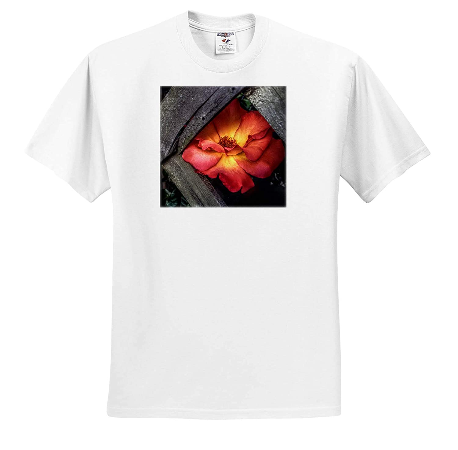 3dRose Stamp City - Adult T-Shirt XL Flowers ts/_320165 HDR Photograph of a Playboy Rose Peeking Through Some Lattice
