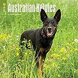 Australian Kelpies 2018 12 x 12 Inch Monthly Square Wall Calendar, Animal Dog Breeds