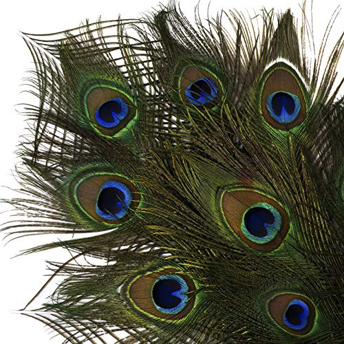 Natural Peacock Eye Tail Feathers - 8-15