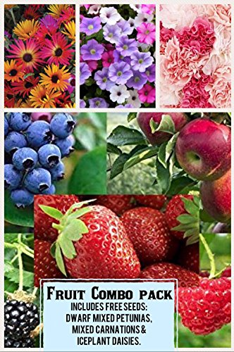 Fruit Combo Pack Raspberry, Blackberry, Blueberry, Strawberry, Apple (Organic) 525+ Seeds 658921943359 Free 3 Flower Packs