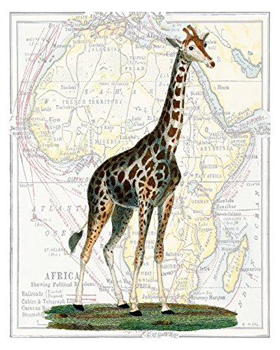 Giraffe in Africa, Tall #4, Elegant 11x14 Print, Overlaid on Classical 18th Century Map of Africa, 11x14 inches (G4M1114)