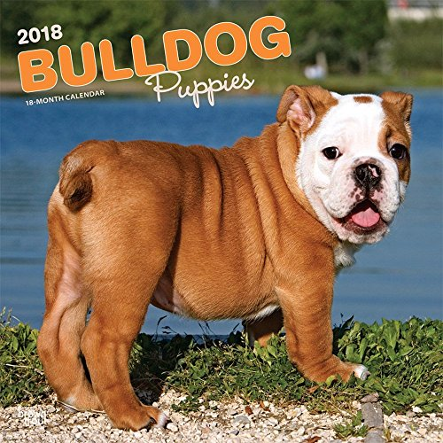 Bulldog Puppies 2018 12 x 12 Inch Monthly Square Wall Calendar, Animals Dog Breeds Terrier (Multilingual Edition) (Bulldog Puppies)