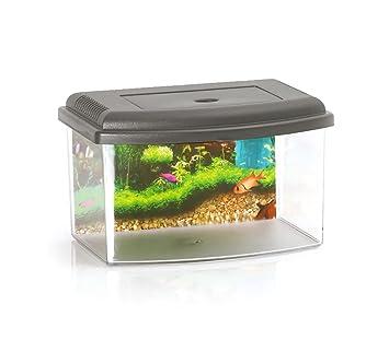 10635 Acuario de plástico rígido rectangular 3L con tapa 22x16x14 cm - Gris: Amazon.es: Deportes y aire libre