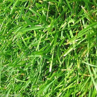 """Bermuda Grass Seeds (Common Unhulled) 2 Lbs Bulk Bag""""Premium Grade"""" : Garden & Outdoor"""