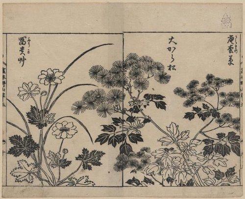 Photo: Photo of Ukiyo-e, Pine Needle Flowers, Anemone, Yasukuni Tachibana, 1755, Japan . Size: 8x10