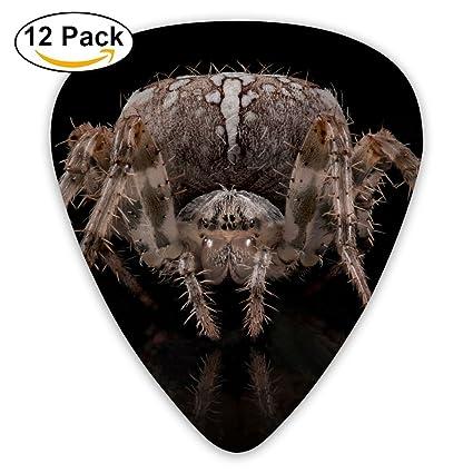 Amazon com - Macro Spider Animals 500px Fashion Celluloid Printing