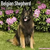 Belgian Shepherd Dog Calendar - Dog Breed Calendars - 2017 - 2018 wall Calendars - 16 Month by Avonside