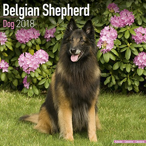 Belgian Shepherd Dog Calendar - Dog Breed Calendars - 2017 - 2018 wall Calendars - 16 Month by Avonside (Shepherd Calendar)
