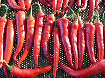 50+ Organic Korean Hot Pepper Chili Heirloom Non-gmo for Kimchi Spicy Red