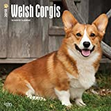 Welsh Corgi Wall Calendar Dogs 2018 {jg} Best Holiday Gift Ideas - Great for mom, dad, sister, brother, grandparents, grandchildren, grandma, gay, lgbtq.