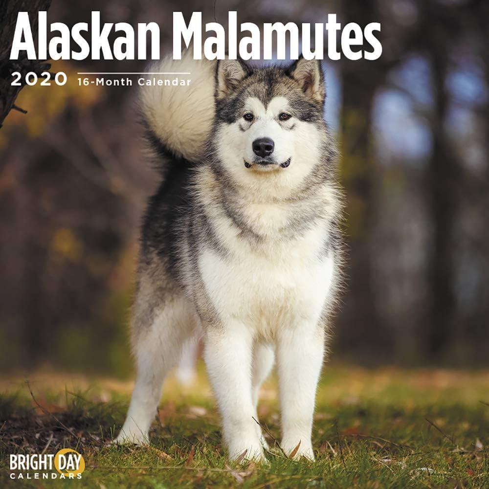2019 ALASKAN MALAMUTE CALENDAR WALL CALENDER