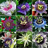 Best Garden Seeds New Variety Rarest Passiflora Passion Mixed Flowers Seeds, 30 seeds, tasty colorful home garden climbing perennial plants