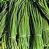 HERB SEEDS: CHIVES 50 Seeds - Pasta Sauces, Breads Easy To Grow, High Germination & Quality