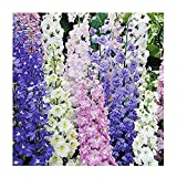 Larkspur Standard Seeds - Wild Delphinium Mixed Colors - 1800+ Seeds