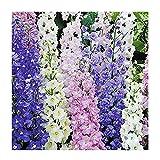 Larkspur Standard Seeds - Wild Delphinium Mixed Colors - 1800+ Seeds