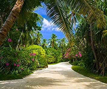 Tapete Palmen fototapete bild tapete palmen allee 300x250cm wandbild amazon de