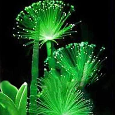 Oliote Emerald Fluorescent Flower Seeds Water Grass Seeds Aquatic Plant Seeds Aquatic Plants : Garden & Outdoor