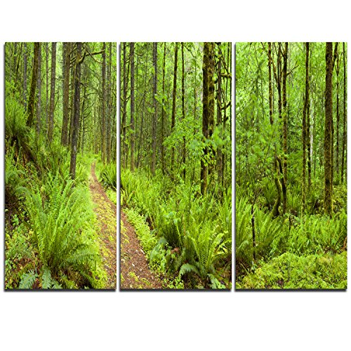 Lush Forest Path Columbia River Forest Canvas Wall Art Print -  Design Art, PT11137-3P