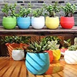 Angel's - 5 Pack Easy Watering Orchid Planter ~ Self Watering ~ Pots for Seedling ~ African Violet ~ Plastic ~ Indoor Seed Starter ~ Perfect for Mini Orchids ~ Nursery ~ Home and Office
