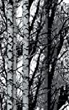 d-c-fix Self-Adhesive Film, Birch Wood, 17.71'' x 78'' Roll, 346-0611