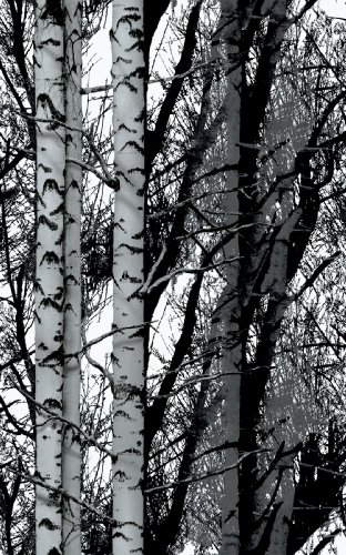 d-c-fix Self-Adhesive Film, Birch Wood, 17.71