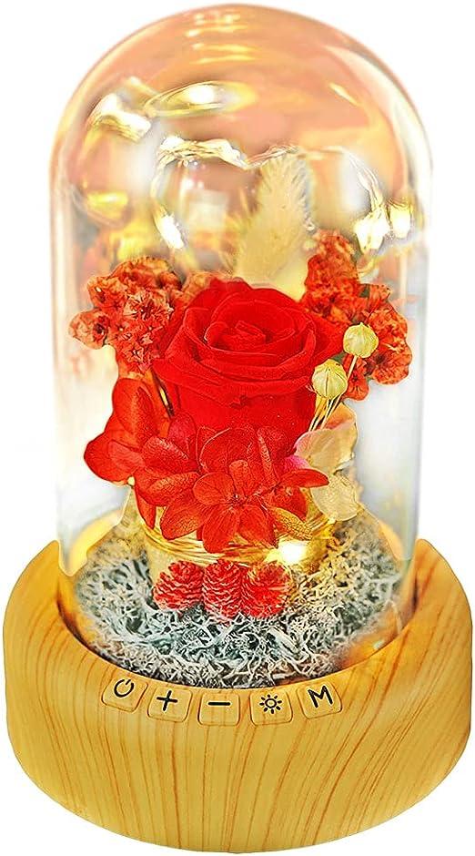 Enchanted Forever Rose Flower Micro Landscape In Glass LED Light Valentine/'s Day