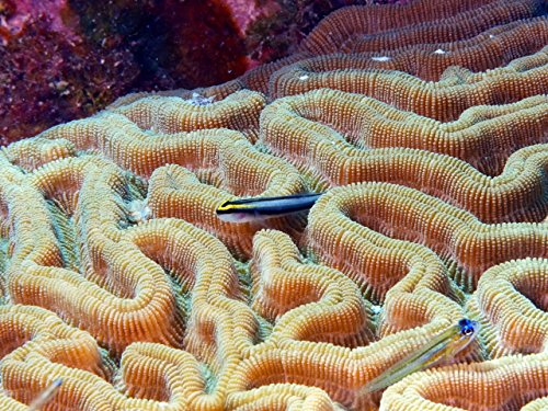 bonaire-national-marine-park