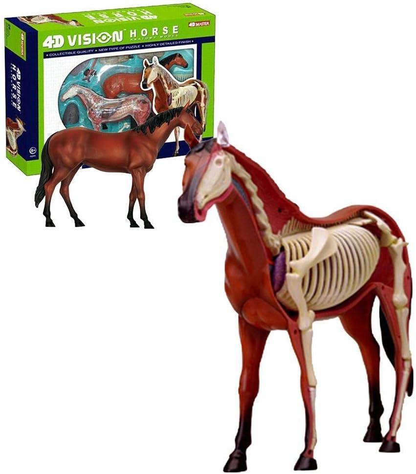 QJXF 4D Caballo anatomía Modelo Kit, Seleton Animal Composición de Aprendizaje de Juguetes educativos, Kit de Conjunto de Animal Puzzle Regalo Educativo para los niños de los niños