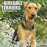 Just Airedale Terriers 2018 Wall Calendar (Dog Breed Calendar)