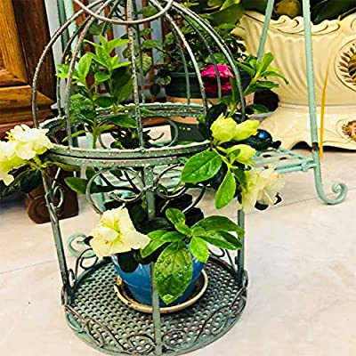 YZCM Hanging Flower Stand, Metal Flower Stand, Wall Decoration, Garden Decoration, Design Outdoor Vertical Garden on The Porch, Terrace, pergola and Other Buildings,L: Home & Kitchen