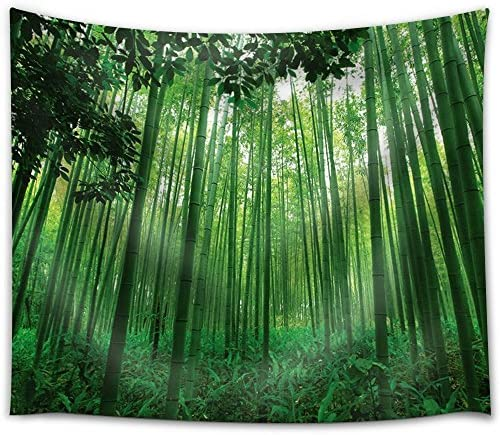Leaves Framing a Bamboo Forest
