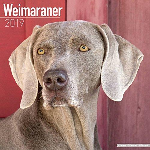 Weimaraner Calendar 2019 - Dog Breed Calendar - Wall Calendar 2018-2019